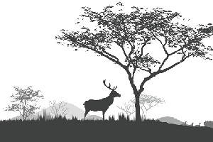 deer-in-feng-shui.jpg