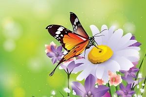 butterfly-meaning.jpg