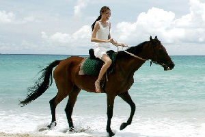 bazi-traveling-horse-star.jpg