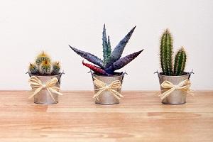 3-cactus-plant.jpg