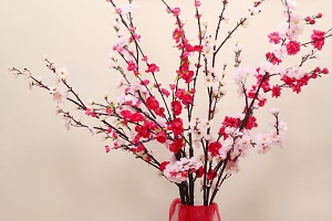 plum-blossoms-at-home.jpg