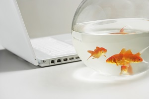 feng-shui-gold-fish.jpg