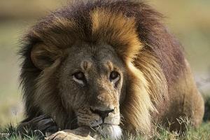 lion-protector-feng-shui.jpg