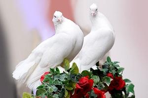 pair-of-white-doves.jpg