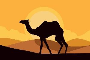 camel-symbolism.jpg