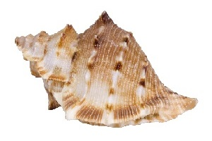 concn-shell-feng-shui.jpg