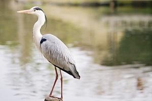 heron-bird.jpg