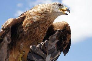 eagle-symbolism.jpg