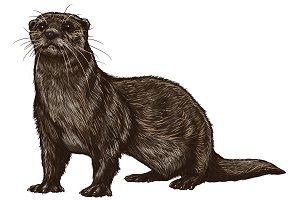 otter-symbolism.jpg