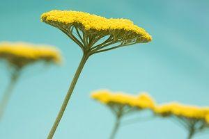 yi-wood-flower-plant.jpg